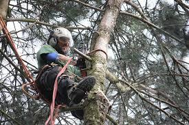 Tree Services Bowmanstead Cumbria